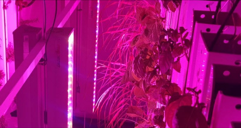 Inside the Container Galactic Farms